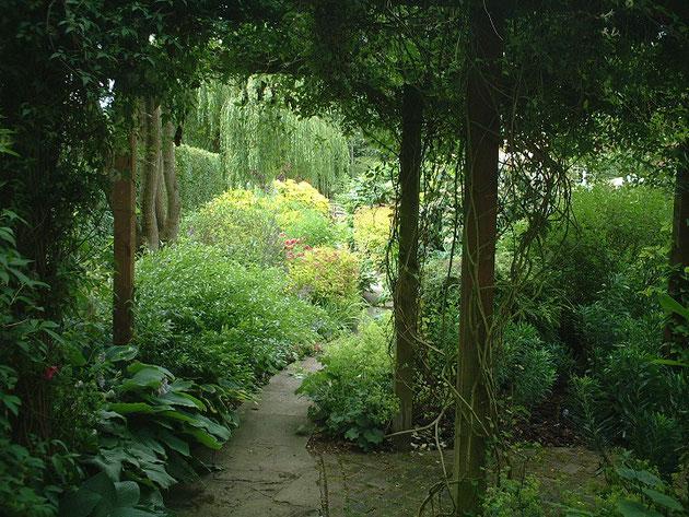 うっそうとしたパーゴラの先に見える植物。