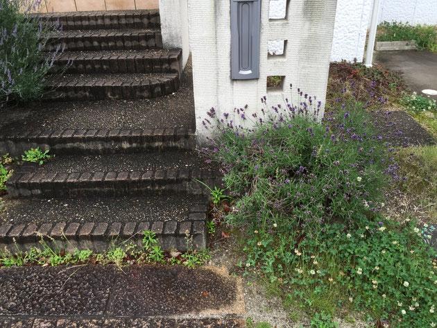 Before 植栽スペースが多くお手入れのかかるエクステリア。
