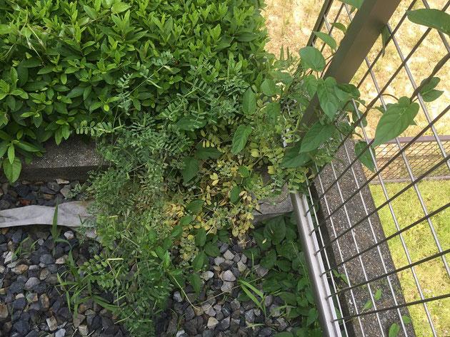 防草シートと砂利があるのに雑草がはえてくる