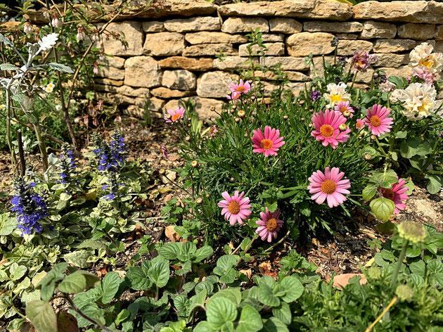 ドライストーンウオーリングの花壇の隅でひっそりとしているヤブラン