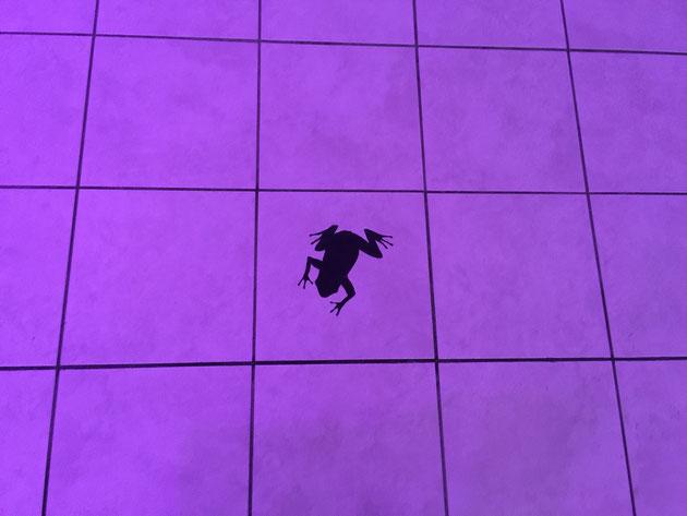 床のタイルにはカエルが!取れないのは凄い!何でくっつけてあるんだろう・・・