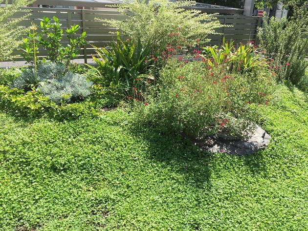 手間のかかり難い植物で構成したした草低木!