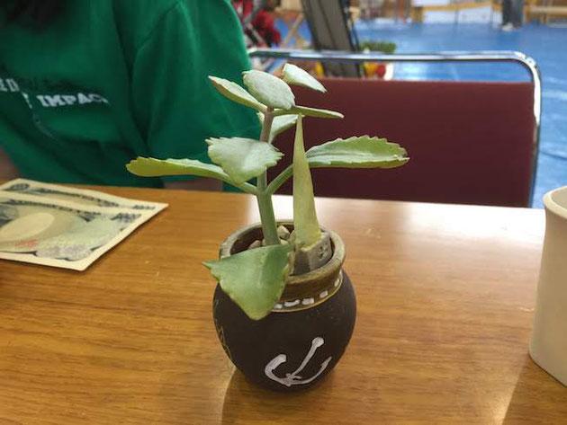 茶色の壷に神戸の錨マークが白く良い色合いです!植物とオーナメントの高さのバランスも凄く良い!