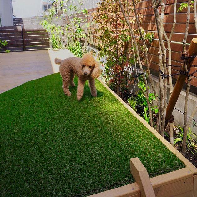 尾張旭市 I様邸 トイプードルのラムセス君も大満足!デッキと人工芝のお庭!