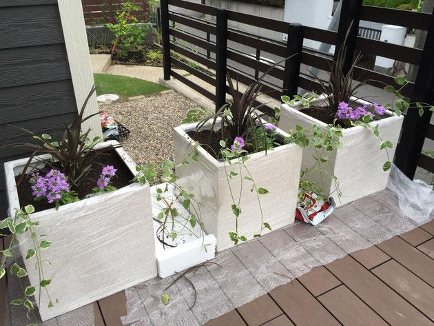 植物の長さを整えて余分な葉っぱを取り除きます。葉っぱは養生の上においておけばすぐに取り除けます。