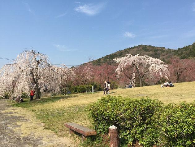 美しい花が見られる東谷山フルーツパーク