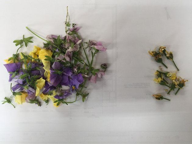 ビオラの花ガラとデイジーの花ガラ