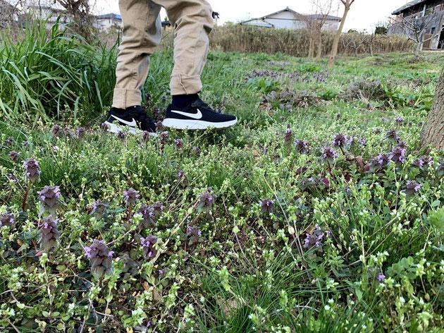 卒園式でおろしたまっさらな靴で春の原っぱを歩くガーデンドクターJr