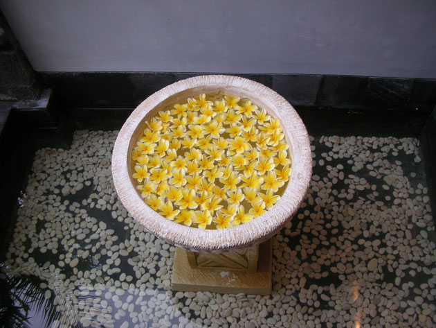 バリな感じの水鉢に浮かべられたプルメリアの花達 素敵だ