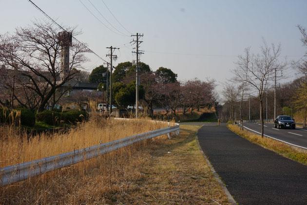 維摩池のすぐ北にある消防学校に植えられたソメイヨシノ。ここは例年他よりも少しだけ遅い気がします。