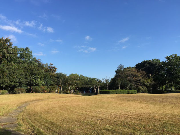 日本の芝生はこのように冬になると枯れて茶色くなる
