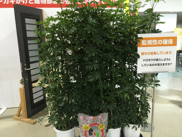 勝手口からの侵入は多いようです。その場合、こんな風に植木が密集していたら・・・