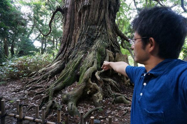 水戸偕楽園にある太郎杉を指差す慎太朗