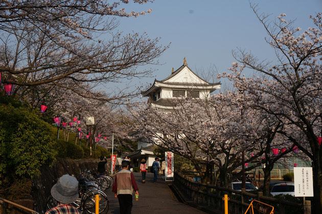 旭城にかかる桜が美しい 桜色の提灯が夜になると明るくなる 出店も出ますよ!!