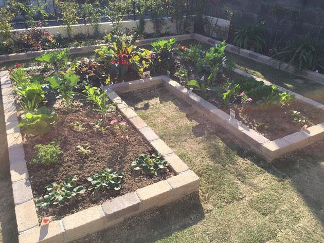 お手入れをしやすいように設計されたポタジェ用の花壇。中には畑の土が入れられている。