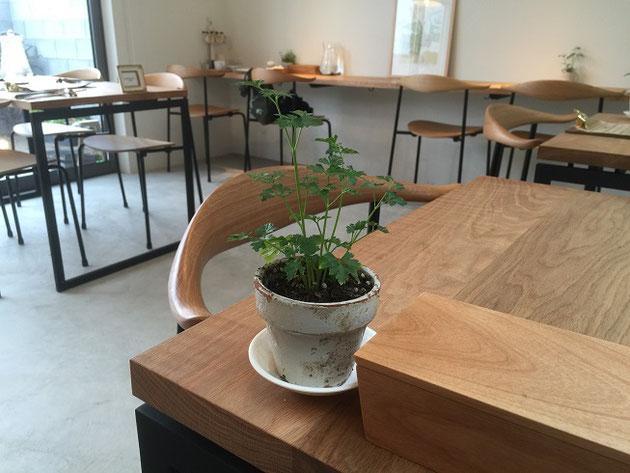 店内の家具も天然木とアイアンで作られていてオシャレ。テーブルにはそれぞれ鉢植えが。これはイタリアンパセリですね。