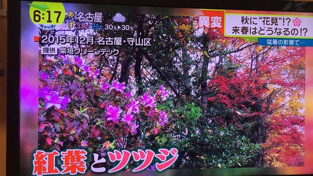 テレビで柴ちゃんの撮った写真が使われました!!!