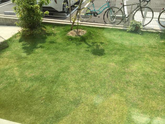 芝生も青々としていて素晴らしい具合。