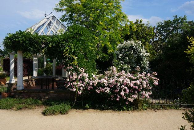 ベルファームの中に広がる本格イングリッシュガーデン バラが見事に咲いていました
