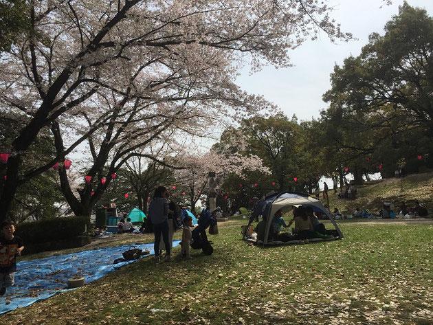 尾張旭市の城山公園のお城の北東にある広場。ここは最高の花見スポット!