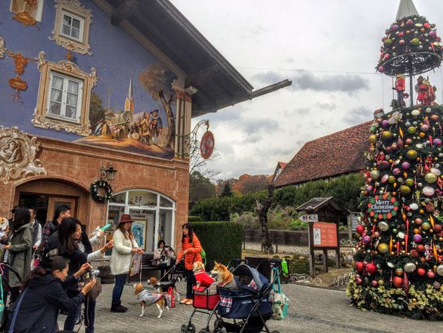 ヨーロッパエリアのクリスマスツリーの前は写真撮影で大盛り上がり!!!