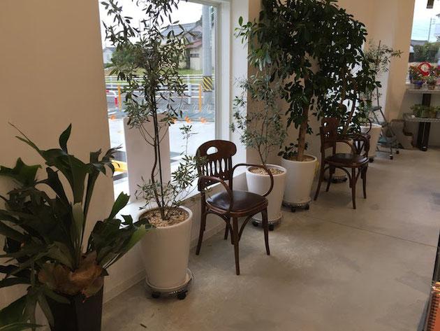 沢山の観葉植物も店内にあるKDMさん。