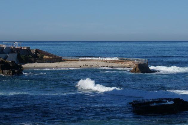 ラ・ホーヤではオットセイなどもビーチで見えます。