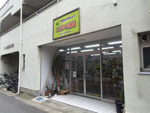 春日井市の勝川の商店街の中にサボテンラボ&ショップこだわり商店さんがある