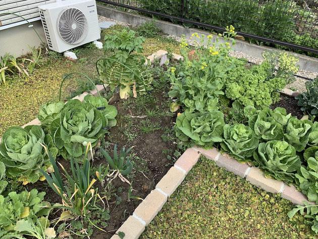 青梗菜、ねぎ、スティックセニョール、白菜。沢山の種類があります。