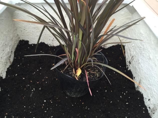 植える苗を置いてみて、土の高さを測る。もうちょっとかな。