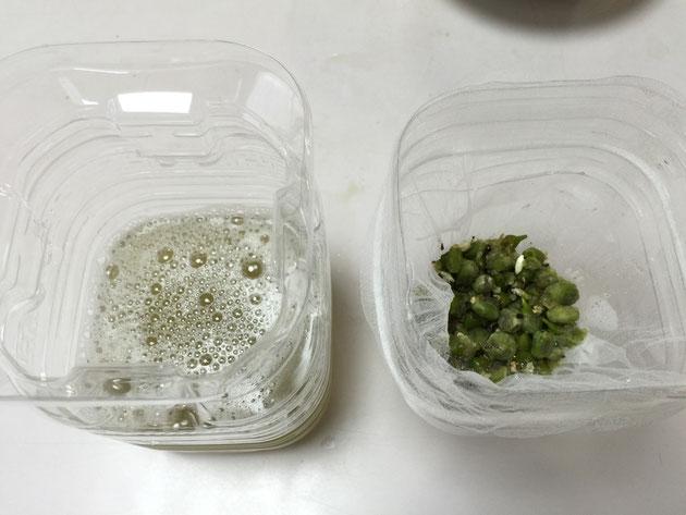 エゴの実と上澄み液をお手製ペットボトル濾過器で分離