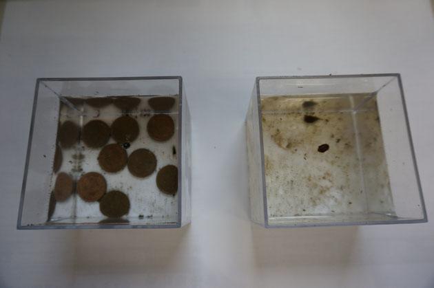 10円玉で蚊の発生を抑えられるか?実験結果の発表です!