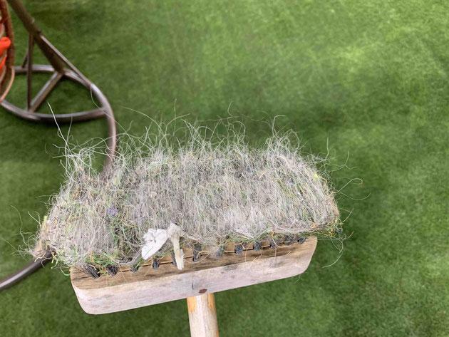 人工芝も一部取れていますが、ほとんどが犬の毛