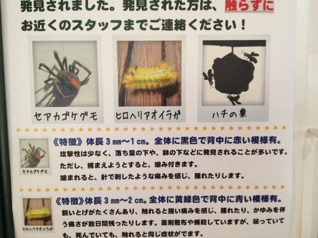 名古屋でもセアカゴケグモが発見されたようです