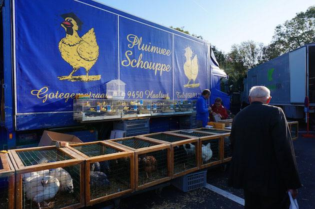 マーケットで鶏を売っている。可愛いヒヨコも居る。