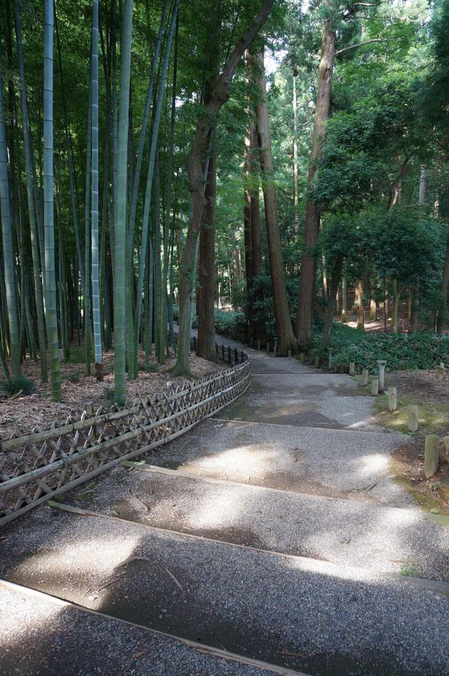 竹と杉の間を抜けて行く通路。竹も杉もそれぞれ非常に背が高いので暗い空間だが、植物のエネルギーがあふれているように感じてとても気持ちがよかった。