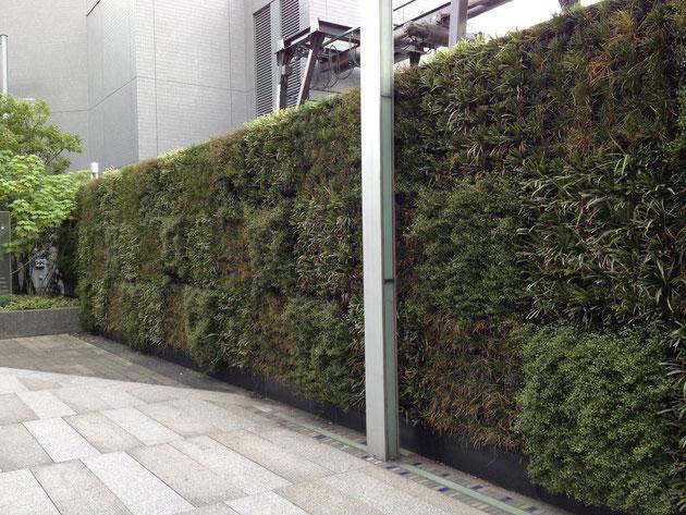 名古屋中心部の超高層ビル ルーセントタワーにある壁面緑化 植物の種類がマスごとに違っていて面白い