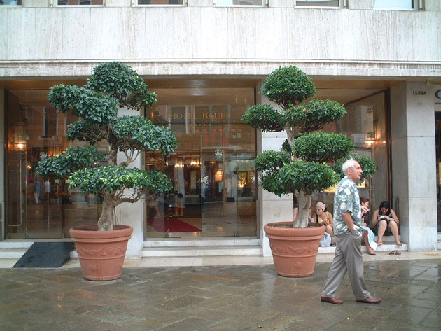 こちらはベネチアのどこかのホテル前にあった植木 これは逆にトピアリーではなく仕立物