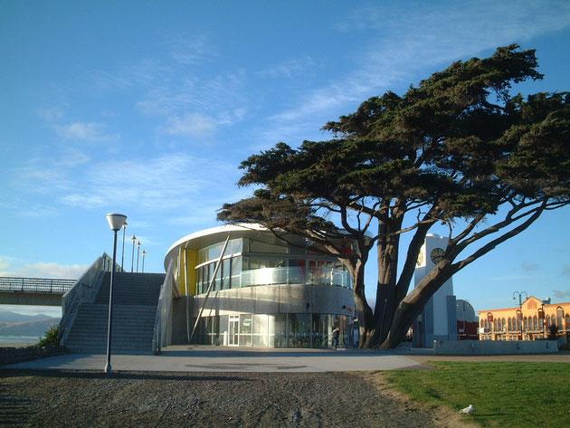ピアの施設にある巨大な植木 移元々有ったものを利用してデザインをするとすごい存在感が出る