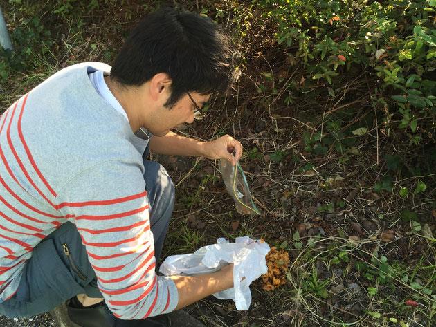 実が外れた中身の種だけをもう一度綺麗に洗うために拾う。拾うときはゴム手袋がお勧め!