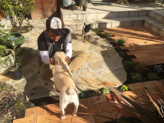 チワワを6匹飼っている犬大好きな職人さんの吉田さん。完成した庭でクー太とナッチと遊ぶ!!!