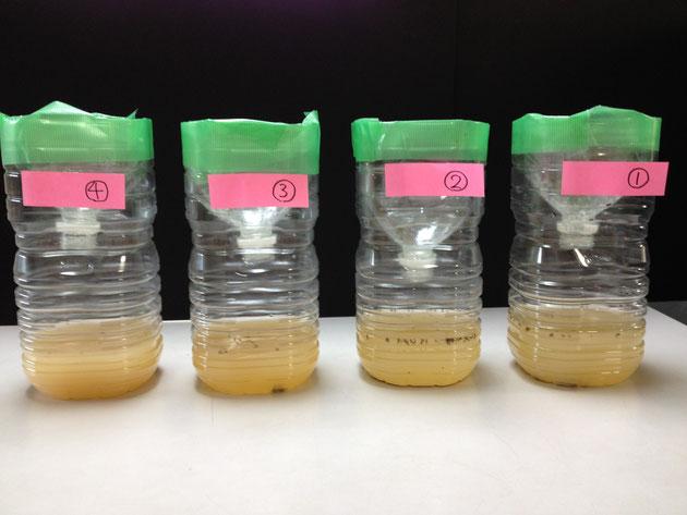 蚊取りペットボトル並べてみると場所による違いが分かる