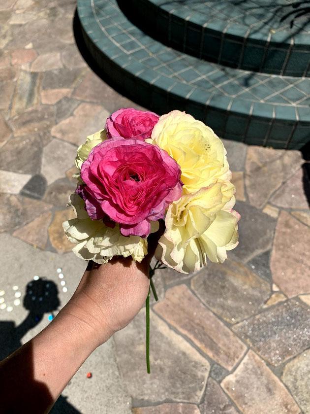 地植のラナンキュラスの折れた花を集めたらブーケになった!