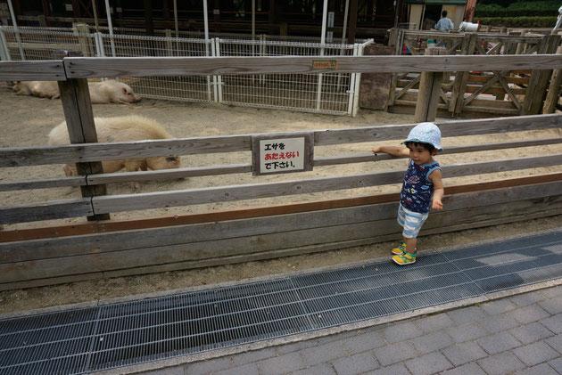 ちびっ子動物村には沢山の動物が!!子供はこちらに大興奮!!