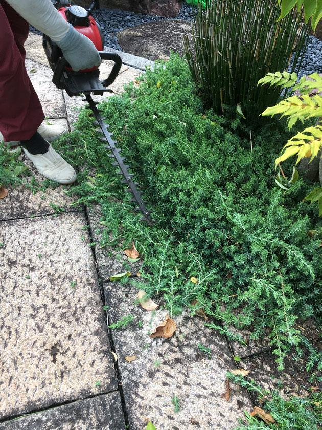 トリマーで低木植栽をカット!