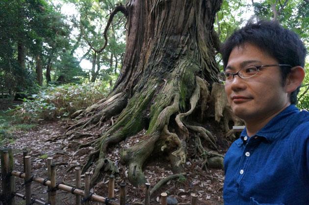 800歳の太郎杉。昔は次郎さんや三郎さんもいたらしい。今は太郎さんだけ。