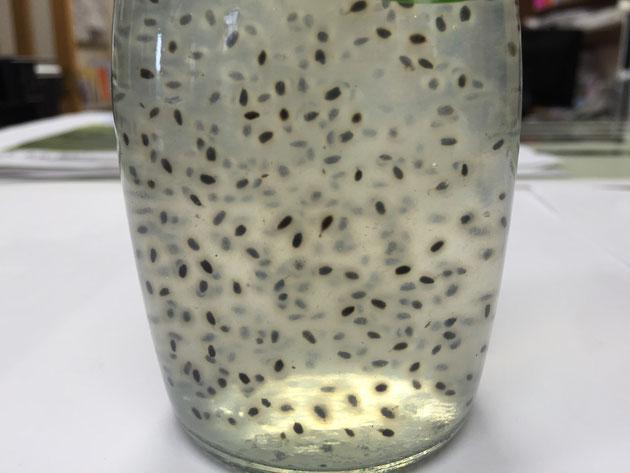 こちらはバジルシードドリンク。粒粒にゲル状のものがまとわりついている。一見するとカエルの卵だが・・・