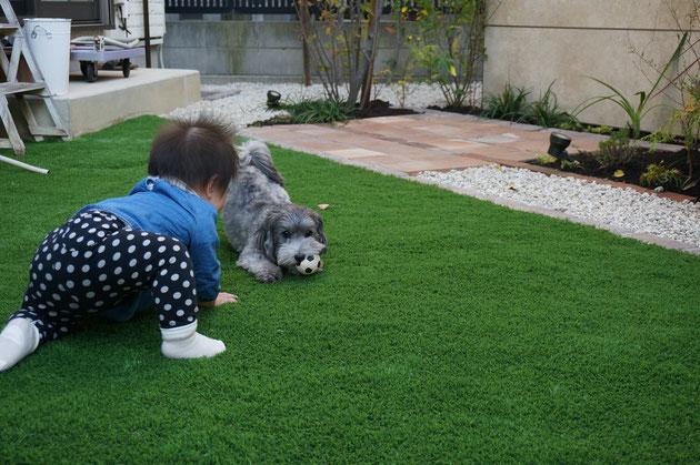 珠ちゃんとマルちゃんの庭が名古屋市北区で完成!赤ちゃんとワンちゃんに優しい庭になりました!
