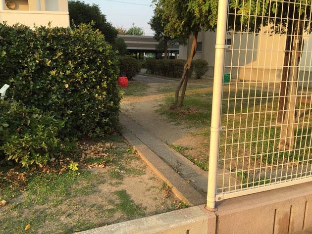 フェンスの横から通れるので、ショートカットの道が出来てしまっている