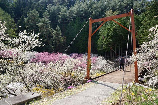 川を少し上がっていくと木製の吊り橋がある。これがゆれてかなりグラグラ。めっちゃいい感じです。